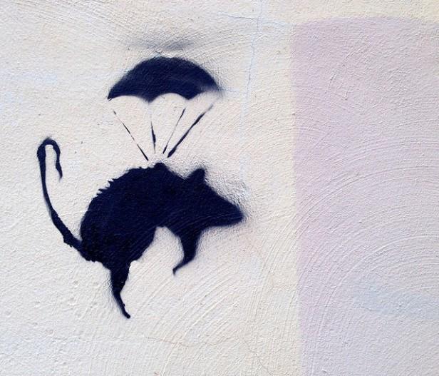 para rat graffiti