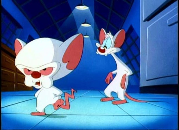 Pinky-the-Brain-pinky-and-the-brain-7398821