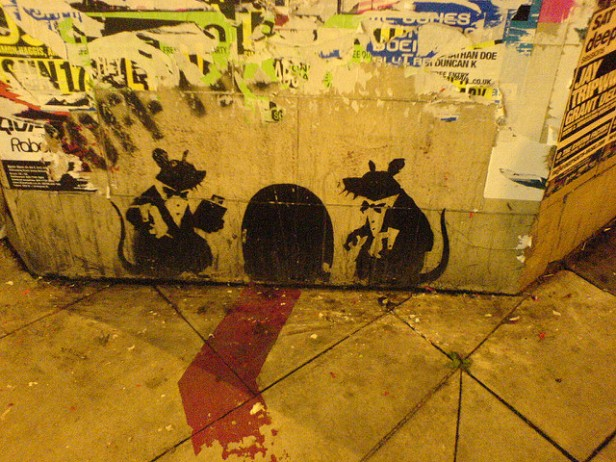 rat steps out graffiti
