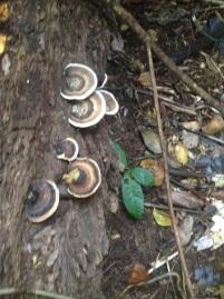 fungi-mission-beach-1